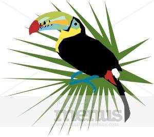 Caribbean clipart tropical climate Caribbean Caribbean Clipart Graphics Toucan