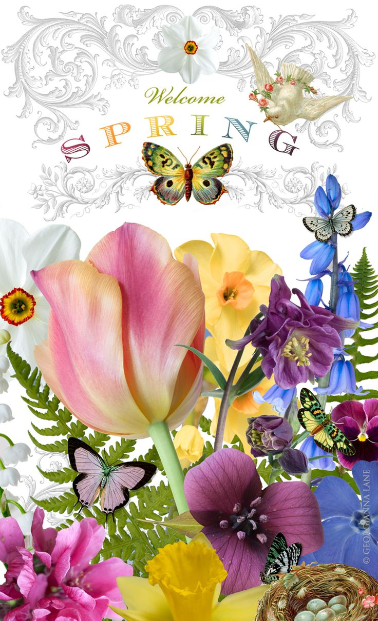 Caribbean clipart welcome flower On images more Pinterest Find