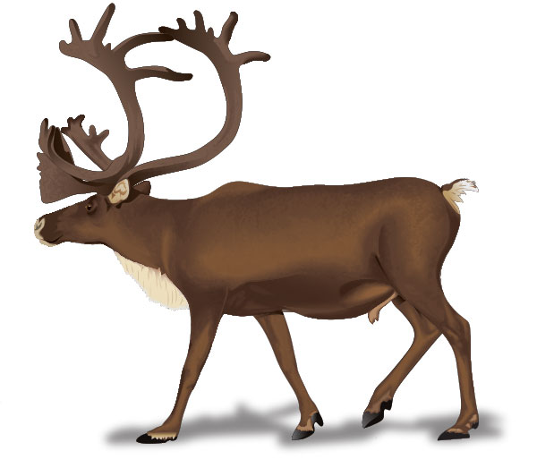 Caribou clipart #2