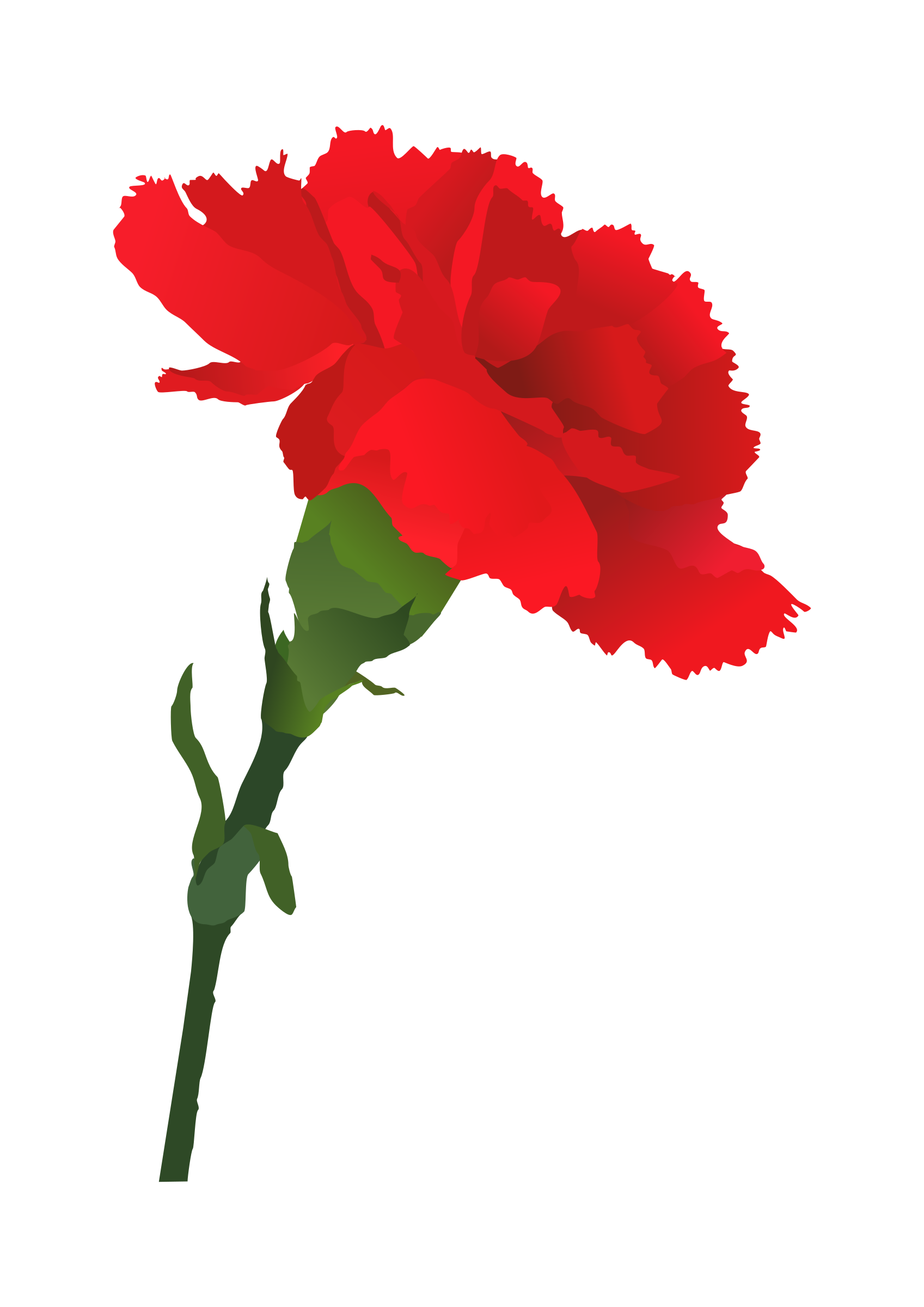 Carnation clipart #7