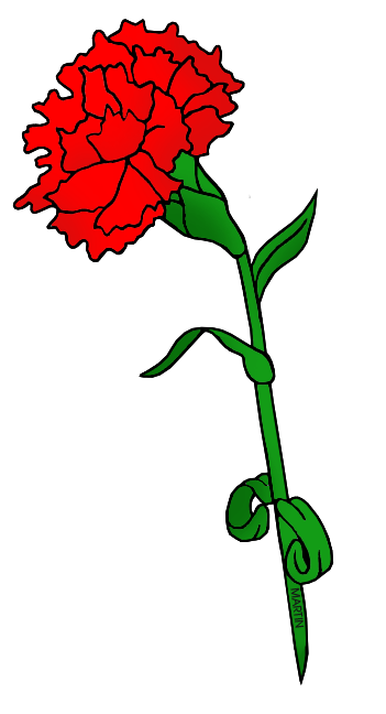Carnation clipart #10