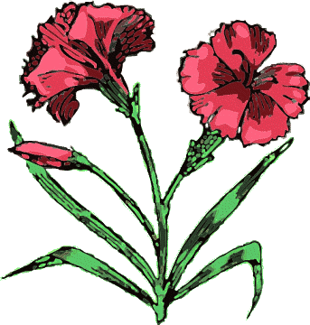 Carnation clipart #6