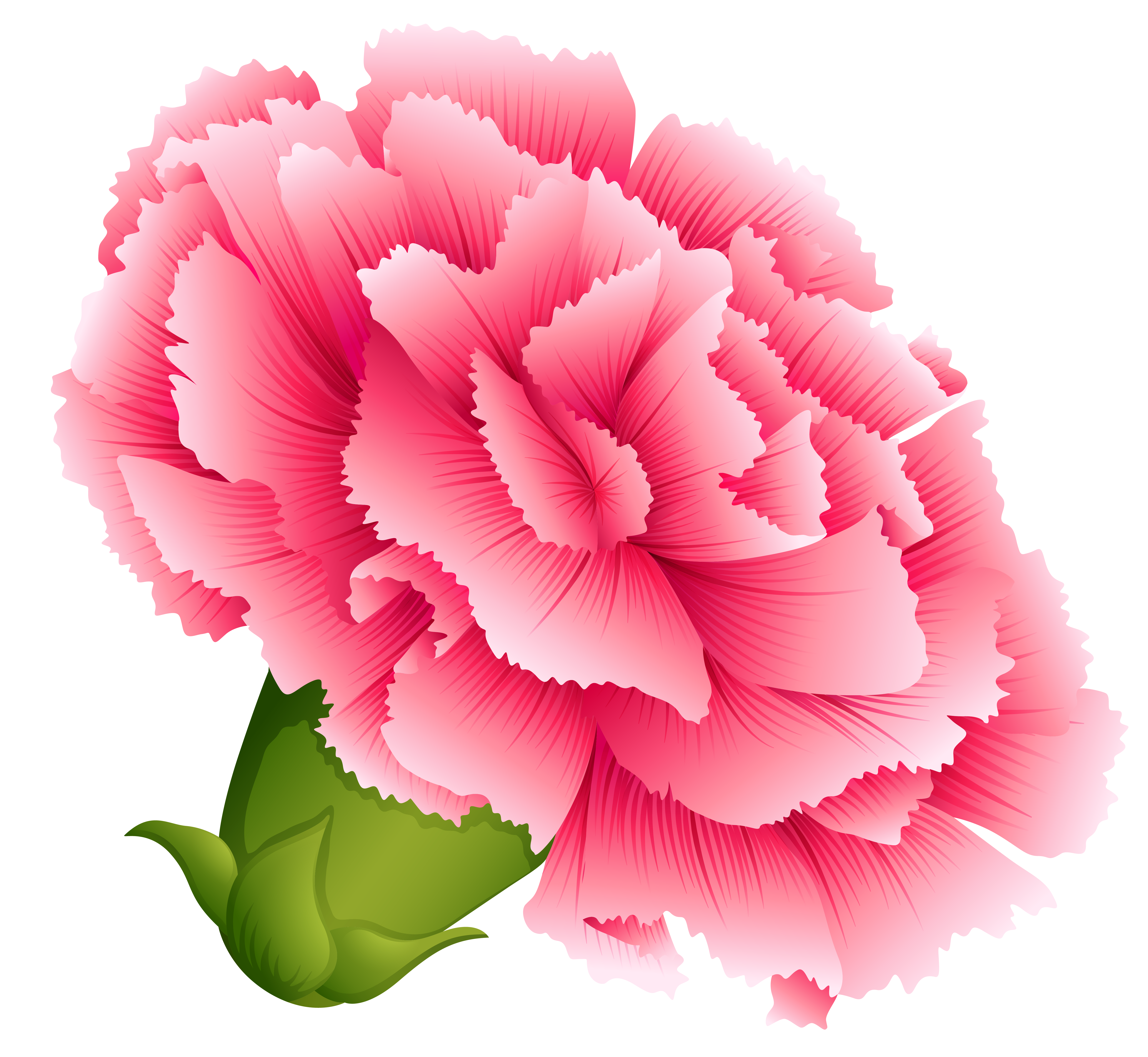 Carnation clipart #11