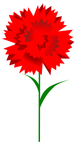 Carnation clipart #13
