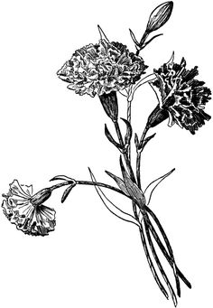 Carnation clipart black and white Of Google Search Pinterest Tissue