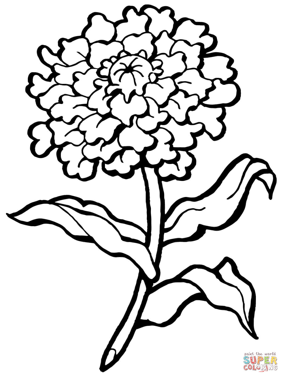 Carnation clipart black and white Pages Pages Carnation Carnation Coloring