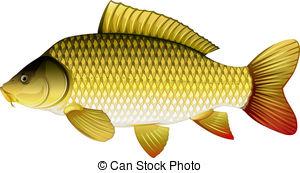 Carp clipart  carp carp common eps10