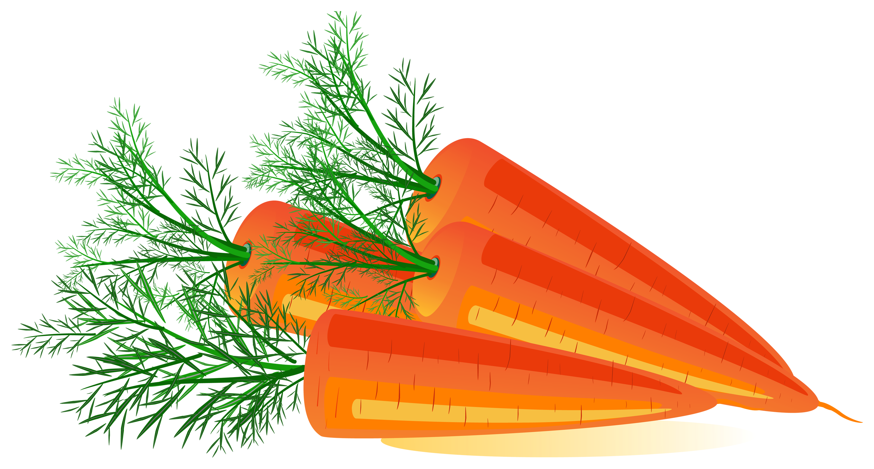 Carrot clipart half eaten PNG PNG Carrot image download