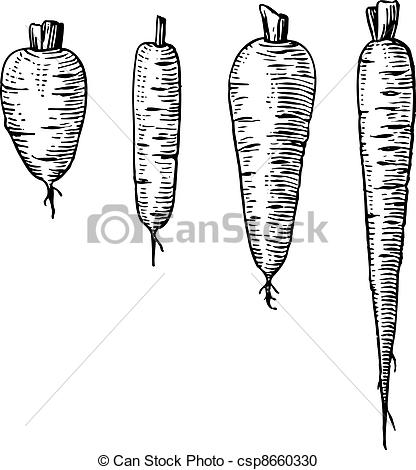 Carrot clipart line drawing Csp8660330 white Vector Clipart Carrot