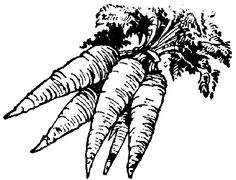 Carrot clipart row Pepper white image gif and