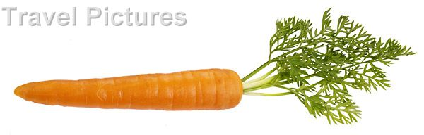 Carrot clipart single vegetable  Search images · single