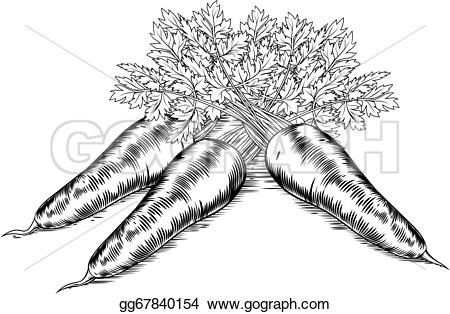 Carrot clipart vintage Drawing woodcut  Vintage A