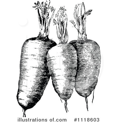 Carrot clipart vintage Illustration (RF) by Free Royalty