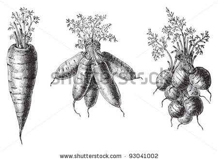 Carrot clipart vintage Lexikon  carrots illustration Set