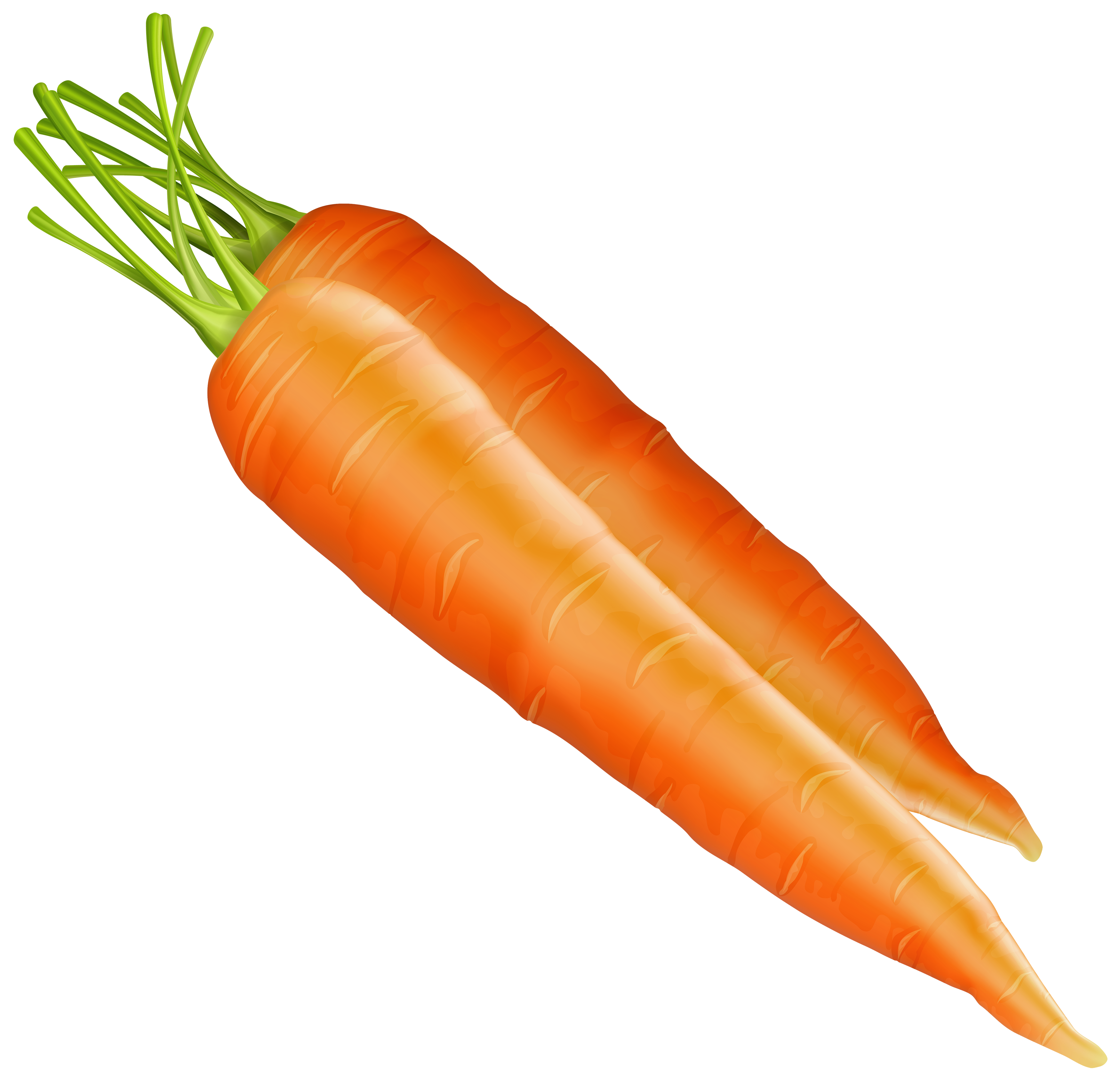 Carrot clipart watercolor Carrots PNG PNG WEB Clipart
