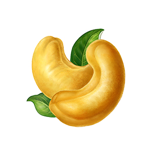 Cashew clipart Thanyapura Phuket Treasures cashew of