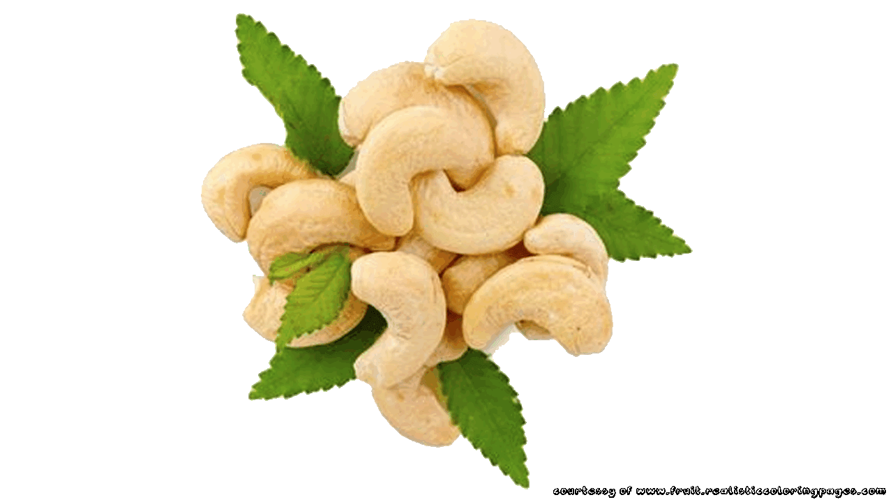 Cashew clipart Z With Pictures cashew nut