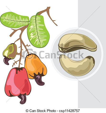 Cashew clipart yellow Csp11428757 Branch nuts with fruits