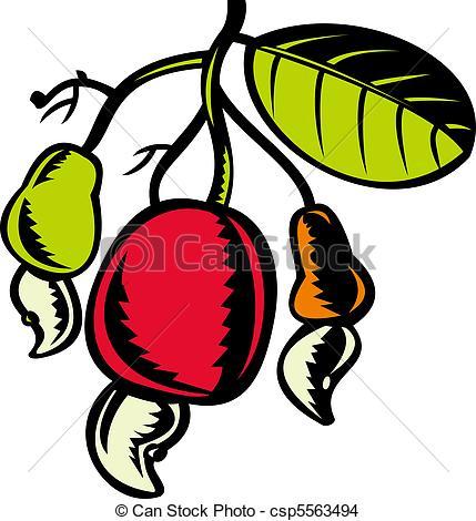 Cashew clipart cashew nut  leaf a cashew nut