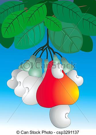 Cashew clipart cashew nut Nut csp3291137 Stock Illustration