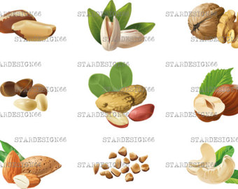 Hazelnut clipart Walnut Clipart Clipart hazelnut nut almond Peanuts
