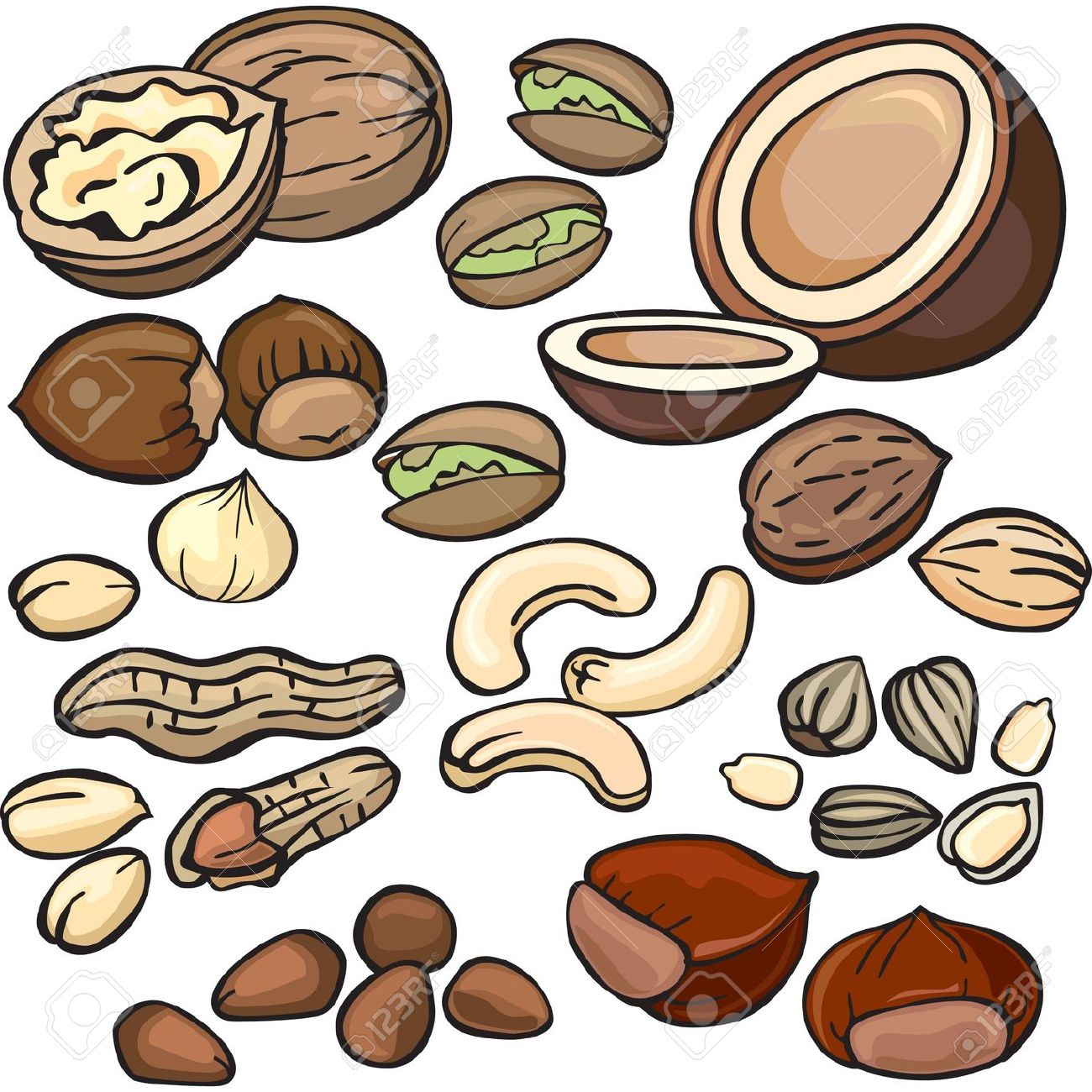 Hazelnut clipart Walnut Clipart Clipart Cliparts collection nuts 293