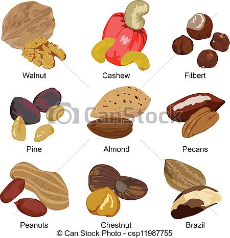 Cashew clipart nut seed Set most of Clipart Vector