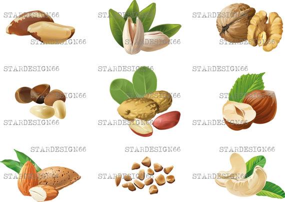 Cashew clipart walnut  nut brazil PNG template