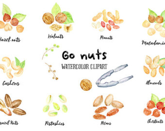 Cashew clipart walnut Walnut Go Peanuts Brazil Watercolor