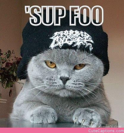 Cat clipart gangster In Cat in the