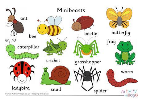 Caterpillar clipart minibeast Word Minibeast Cards Mat Minibeast