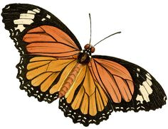 Caterpillar clipart painted lady Painted Blue Butterfly Monarch collection