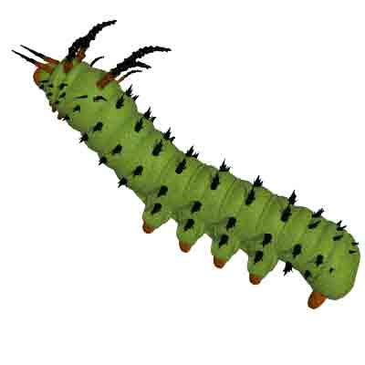 Caterpillar clipart catepillar Free Clipart monarch%20caterpillar%20clipart Clipart Caterpillar