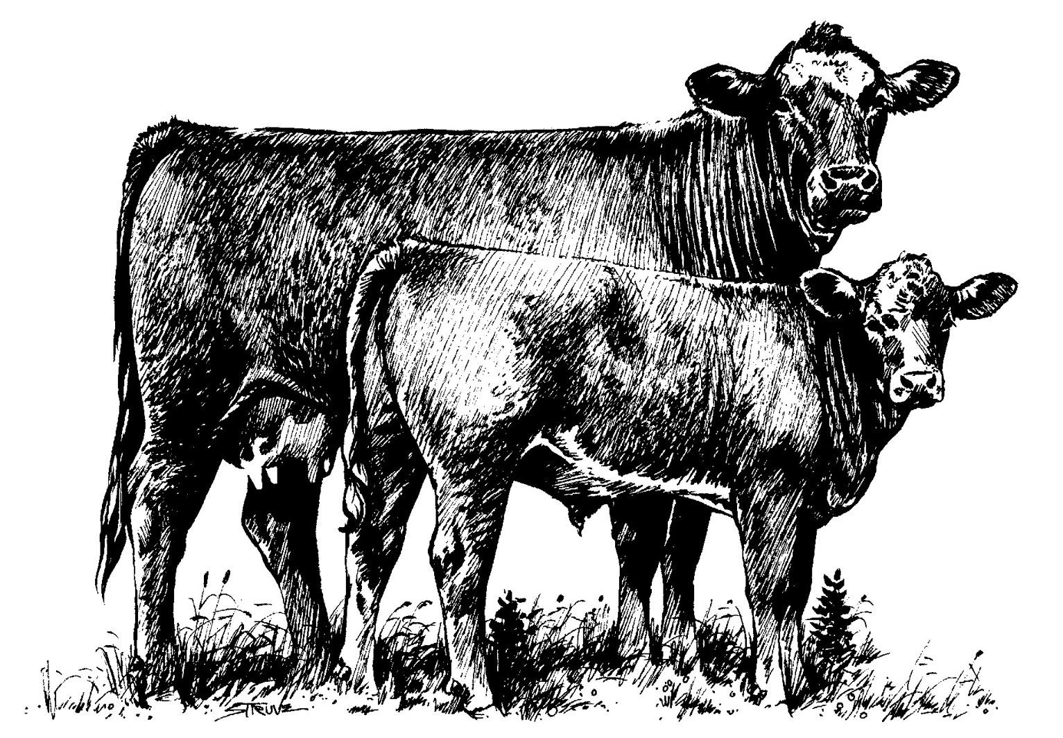 Cow clipart cattle drive Clip Art Panda Cattle Clipart