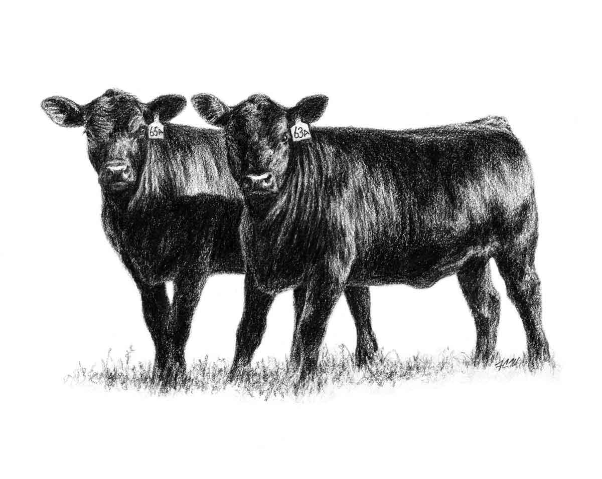 Cattle clipart Art Angus Clip Heifers