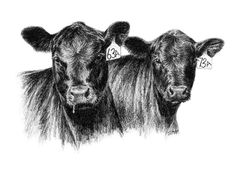 Cattle clipart angus cow Clip Cow cow  Angus