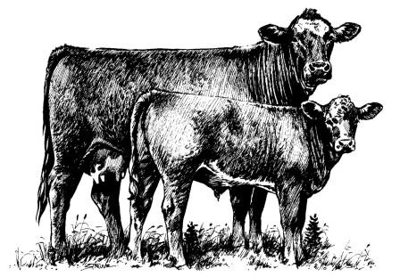 Cattle clipart angus cow Bull cow cow Stylized calf