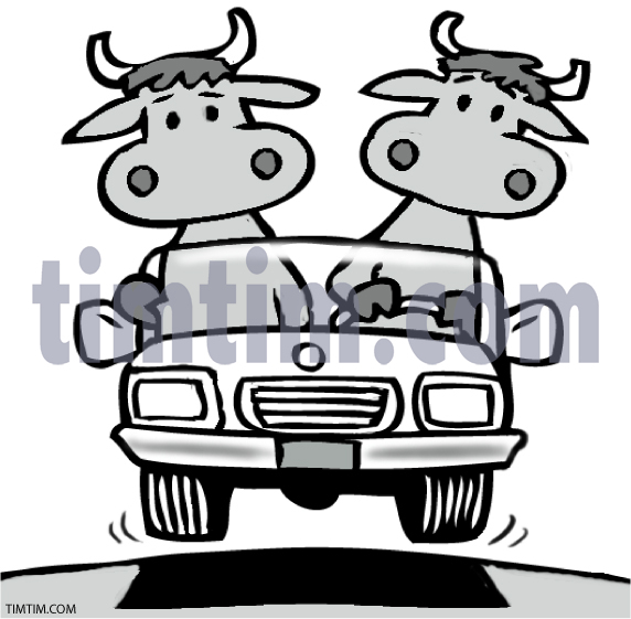 Cow clipart cattle drive Farm & of Cattle US