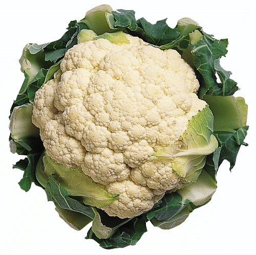 Squash clipart cauliflower 1 Clipart page images Free