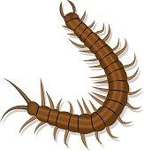 Centipede clipart cartoon Shadow Vector  Centipede Clip