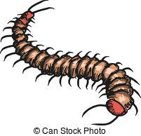 Centipede clipart Centipede Drawings green centipede of