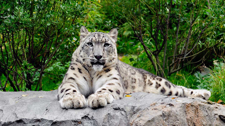 Central Park clipart Wild Central  Wildlife Saving