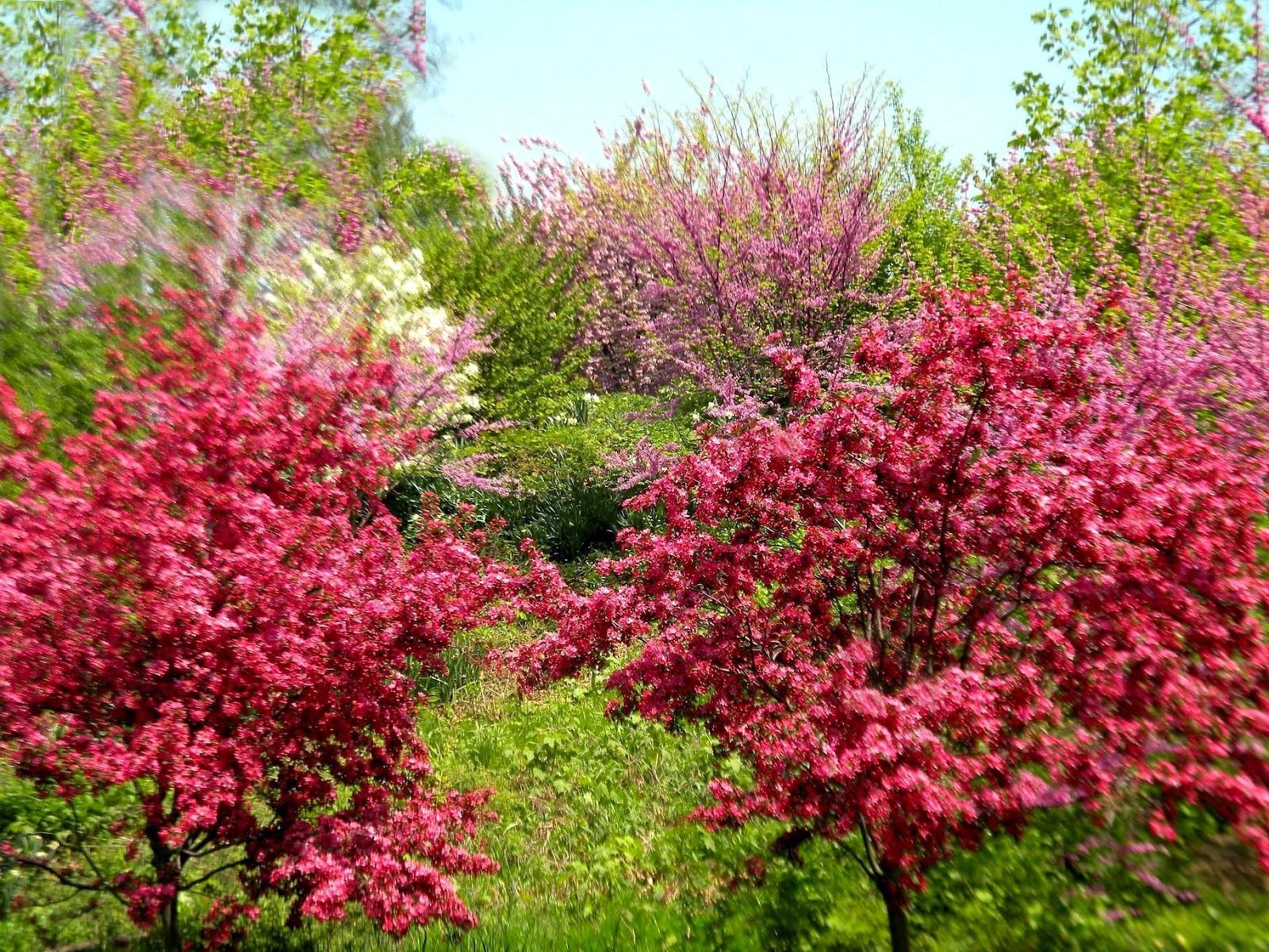Central Park clipart city park Domain City Park New Public