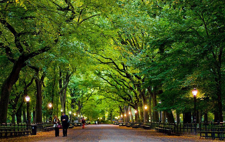 Central Park clipart Jpg Unit Medical Central Central