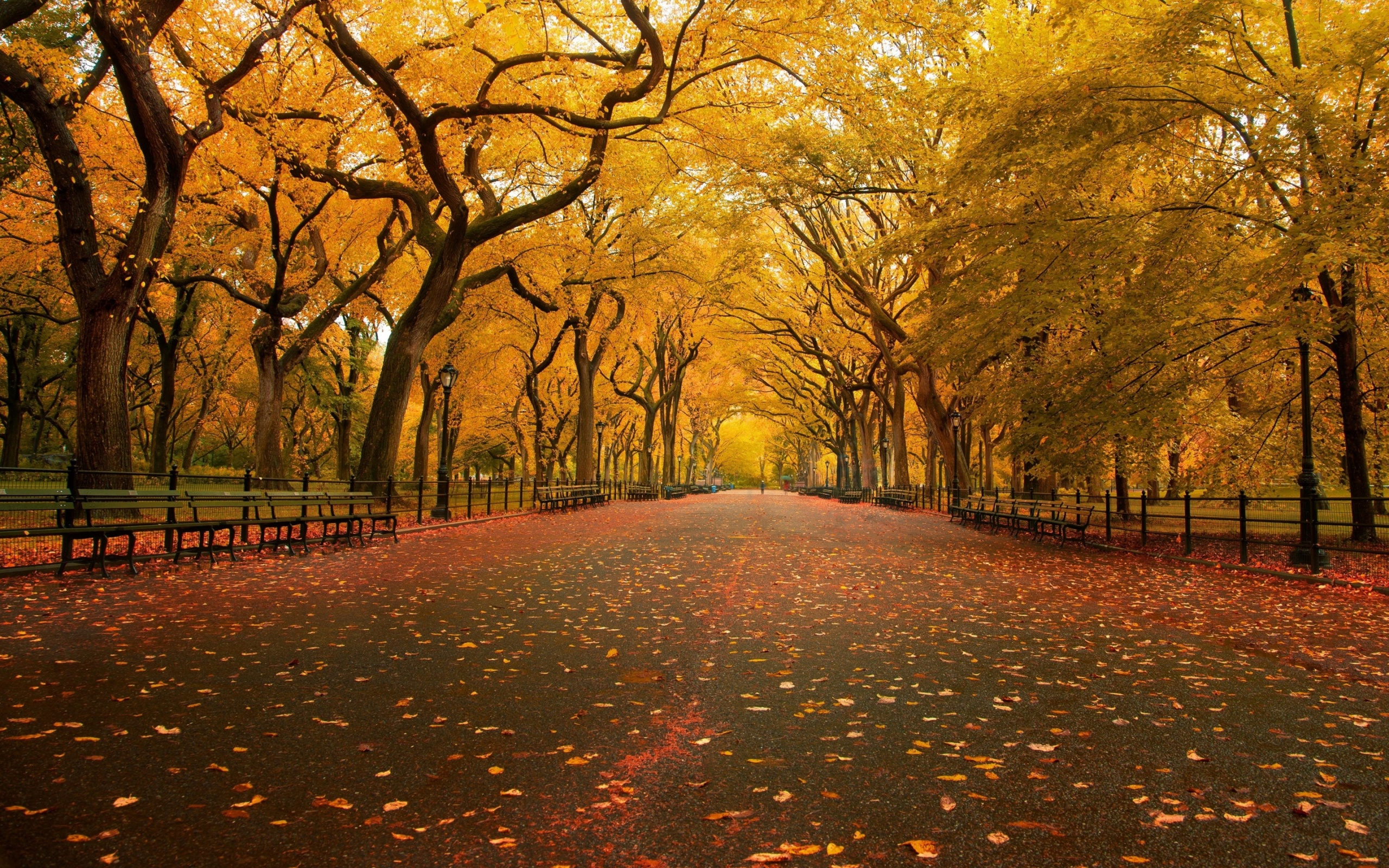 Central Park clipart Photo Central the Photo and