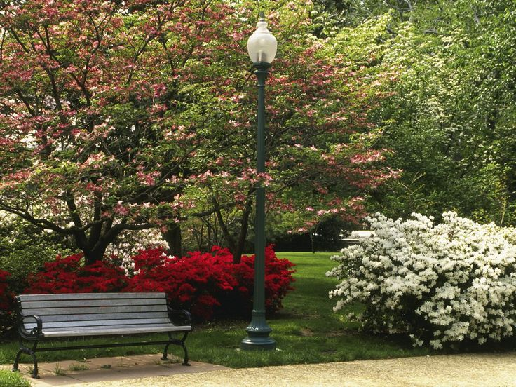 Central Park clipart park background Images City Central New in