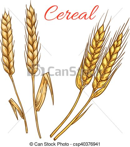Cereal clipart rye Vector Vector and ears EPS