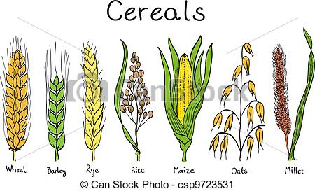 Cereal clipart rye Clip hand barley Cereals drawn
