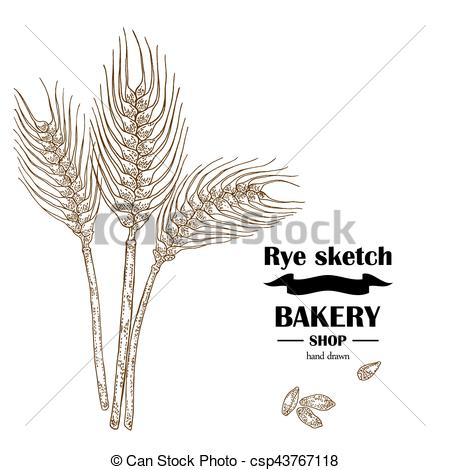 Cereal clipart rye Hand drawn illustration Art