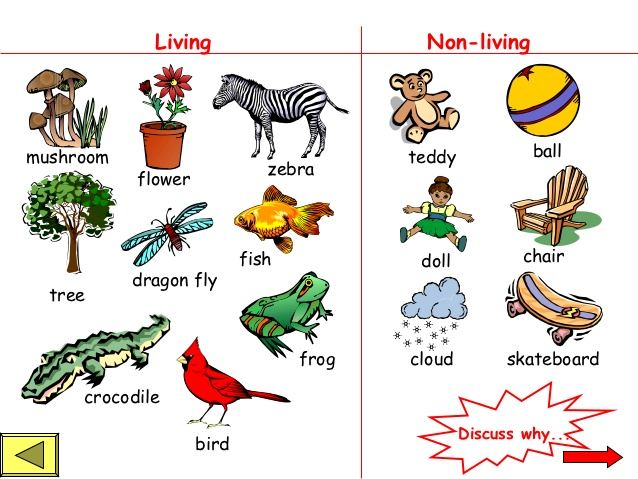 Photography clipart non living Non powerpoint Living  living